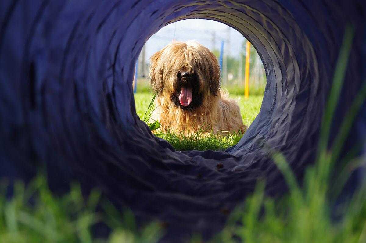 Urlaub mit hund ferienhaus zell am see for Ferienhaus juist mit hund